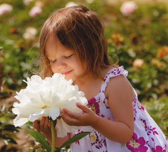 Little girl smelling the beauiful peonies at Adelman Peony Farm
